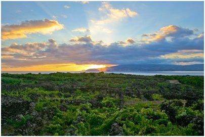 Azorit kuva - viinitarha Picon saarella