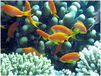 Egypti Hurghada - Punaisenmeren koralleja ja kaloja