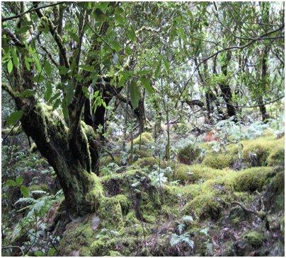 Espanja Kanariansaaret Garajonayn kansallispuisto La Gomeralla