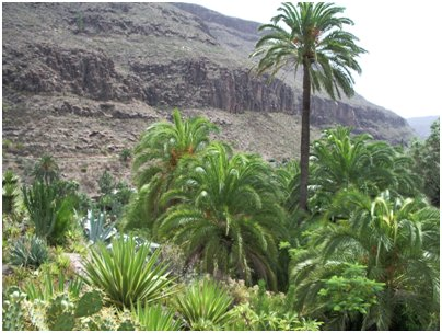 Espanja Kanariansaaret kaktuksia ja mehikasveja Palmitos Park Gran Canaria