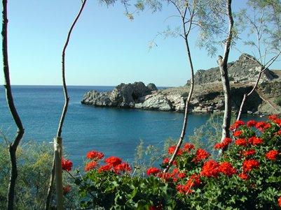 luonto kuva Hania Kreeta Kreikka kukkia