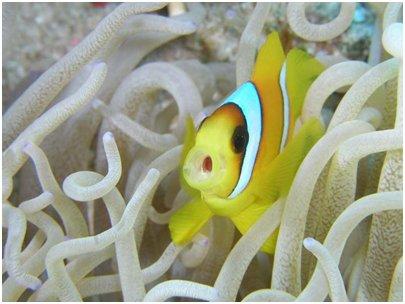 Egypti Sharm el-Sheikh - Punainenmeri koralli ja värikkäitä kaloja