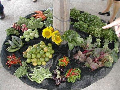 Kuubalainen keittiö Puutarhan tuotteita - Santa Clara - Kuuba ruoka kuva loma